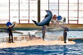 delfiner redder liv