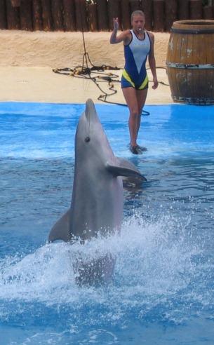 delfiner i fangenskab