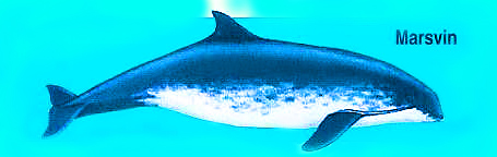 hvad spiser en delfin